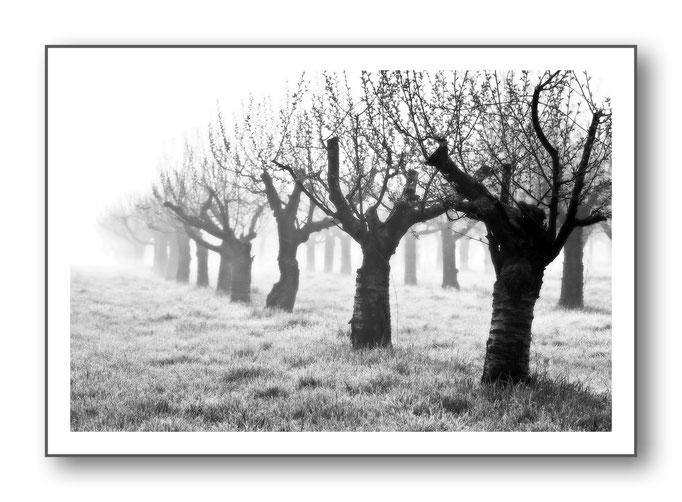 Foto Natur Schwarz - Weiss 11