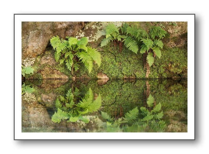 Foto Natur Wasser 2