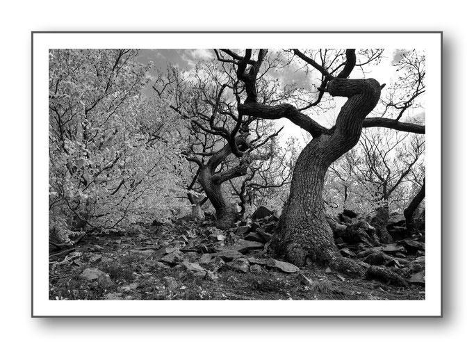 Foto Natur Schwarz - Weiss 9
