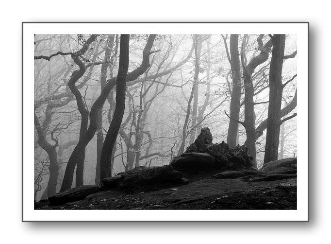 Foto Natur Schwarz - Weiss 19