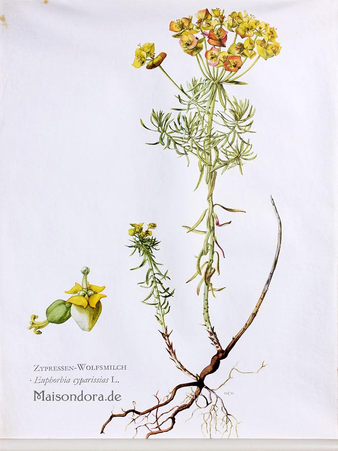Vintage Schulwandkarte Rollkarte Natur Wildblumen