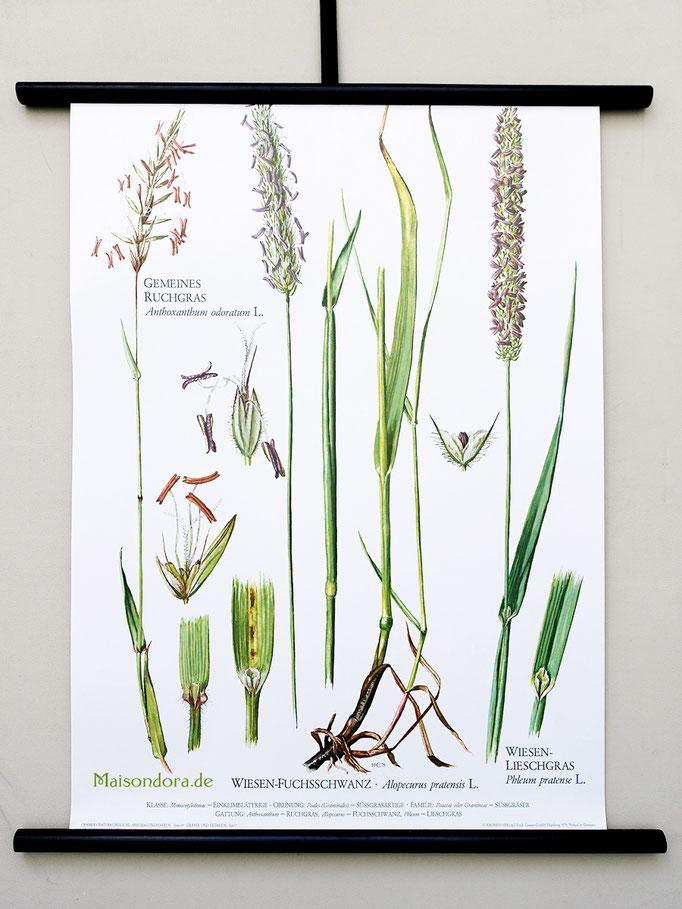 Alte Schulkarte Rollkarte Lehrmittel Karte Pflanzen