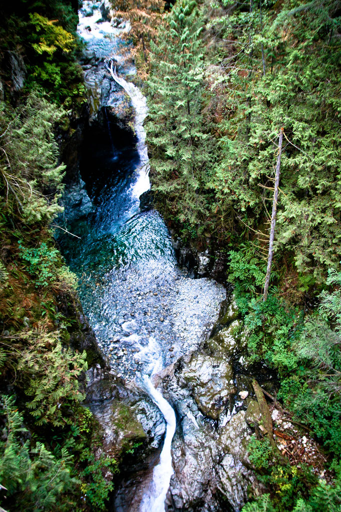Lynn Canyon  - Vancouver - Colombie Britannique - Canada - Swhitdream