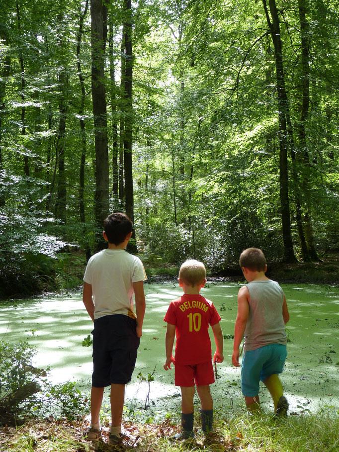 Promenade en forêt de Bercé