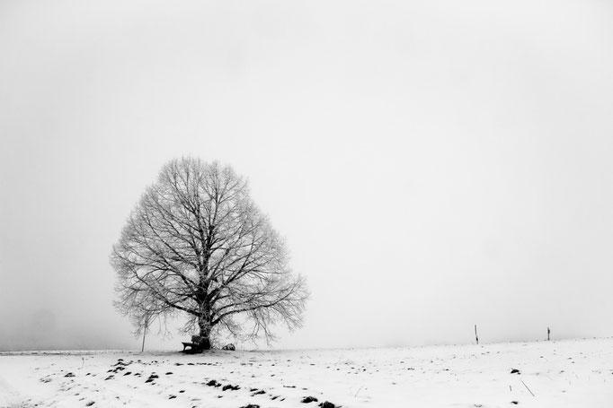 Solitär-Baum im Winter, Januar 2016