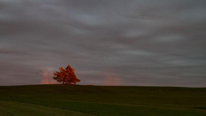 Solitärbaum im Herbst, Oktober 2016