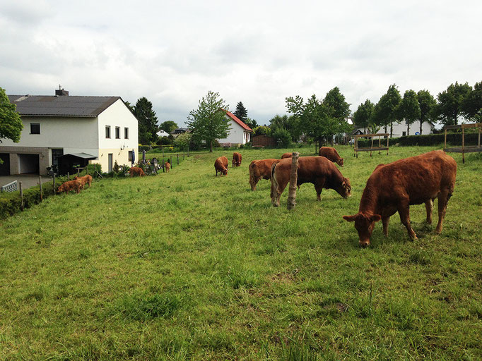 Kernbachhof Weber Limousin-Rind Remagen