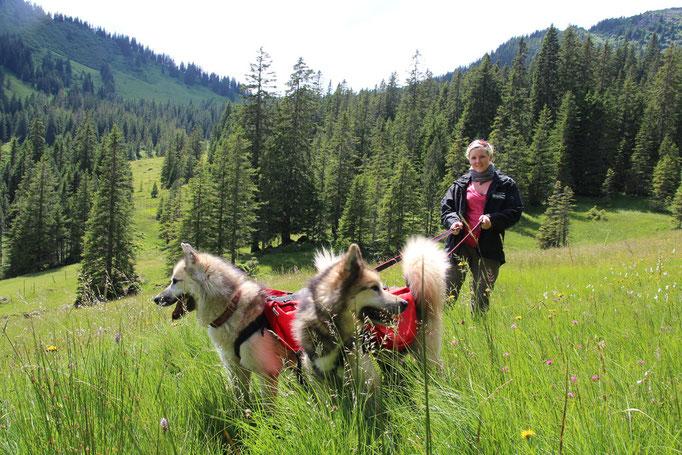 Wandern mit den Hunden