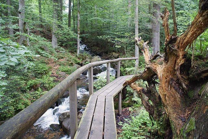 Nationalpark Bayerischer Wald (Foto Alice Alteneder): Seelensteig