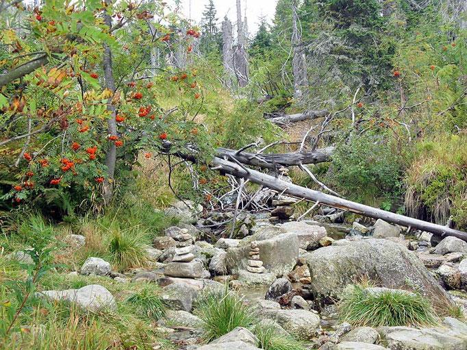 Nationalpark Bayerischer Wald (Foto Baums)