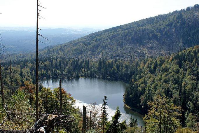 Nationalpark Bayerischer Wald (Foto Alice Alteneder): Rachelsee von oben