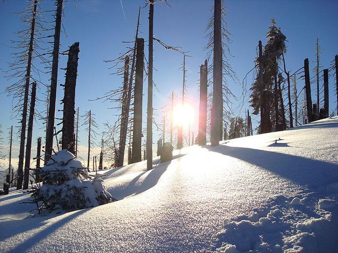 Nationalpark Bayerischer Wald (Foto Rieder): Winterlandschaft