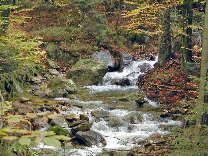 Nationalpark Bayerischer Wald: Bergbach