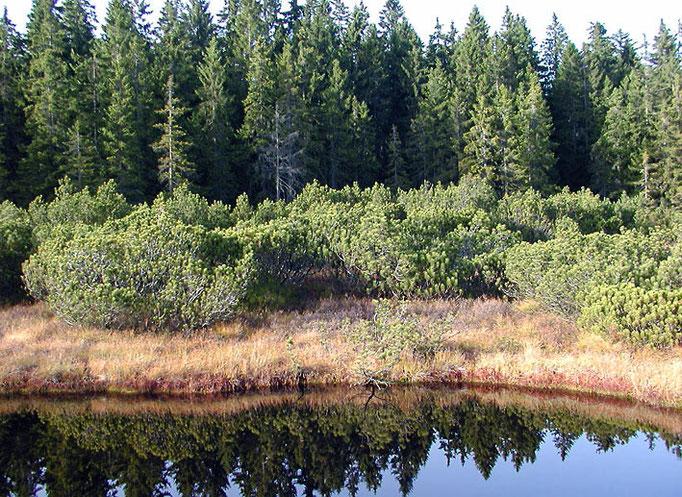 Nationalpark Bayerischer Wald: Filz im Nationalpark