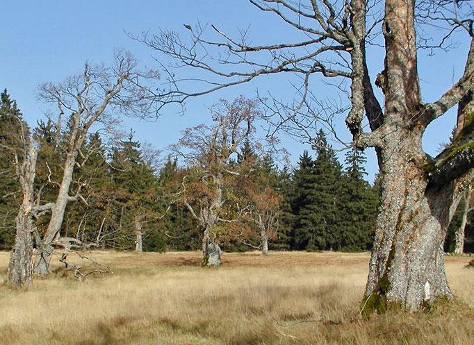 Nationalpark Bayerischer Wald: Schachten