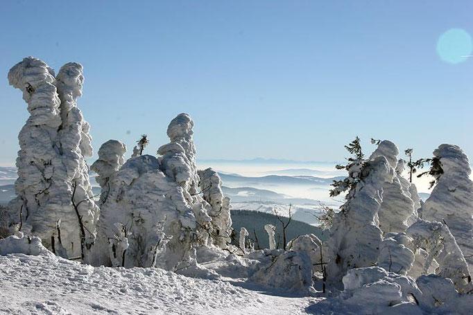 Nationalpark Bayerischer Wald (Foto Pöhlmann): Lusen