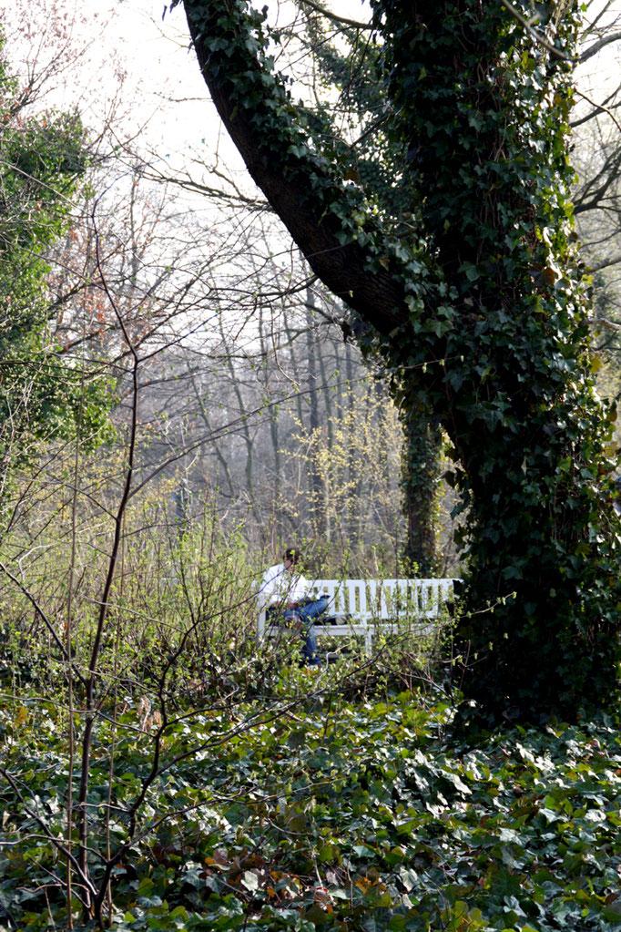 Ein Mann halb verdeckt mit Büschen sitzt lesend auf einer Bank auf der Luiseninsel Anfang April im Schlossgarten. Foto: Helga Karl