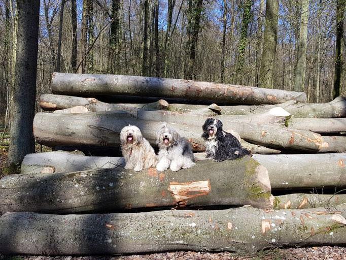 Waldspaziergänge mit Fiona, Han-na und Lisha geben Kraft