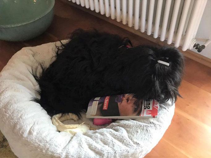 Pepper, die Zeitschrift besitzt er legal! (J)