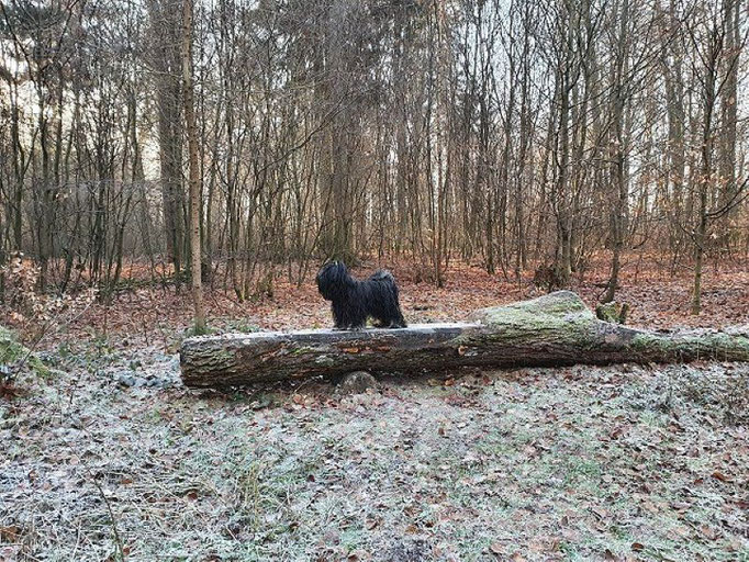 ...der Waldschrat ;-)