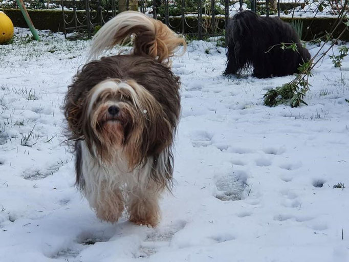 Jippieh Schnee!