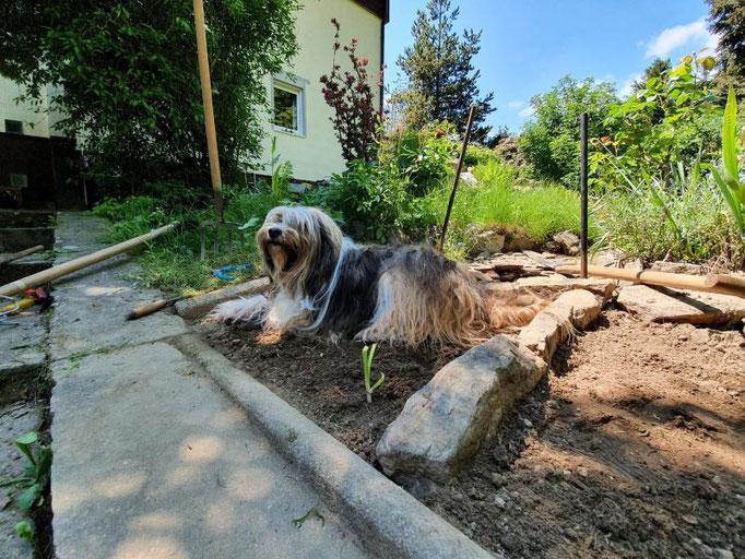 Milka hilft im Garten