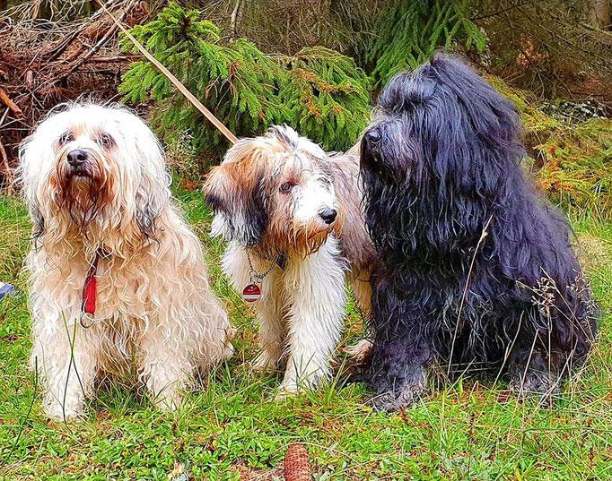 Fiona, Lakshmi und Yeshi im Taunus