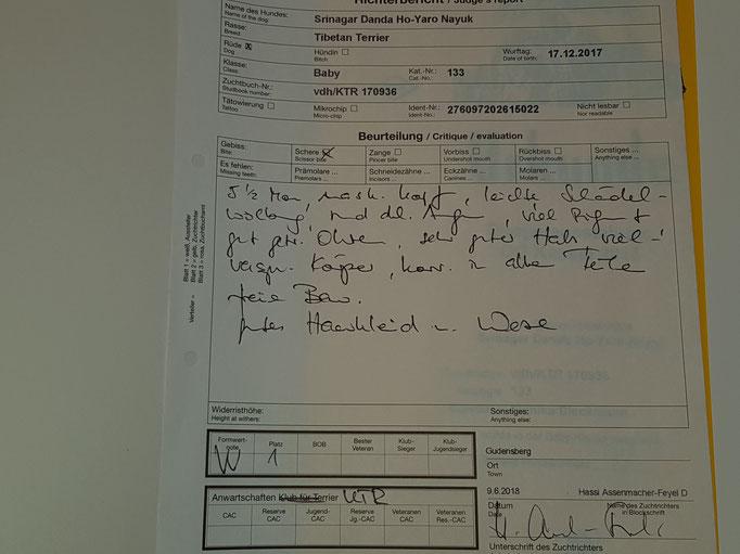 Puppyklasse Juni: feiner Bericht und vv1 in Gudensberg