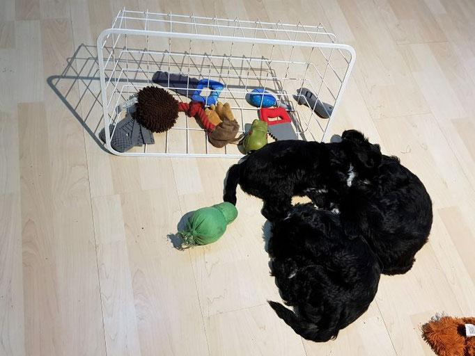 erschöpft inmitten der Spielsachen eingeschlafen