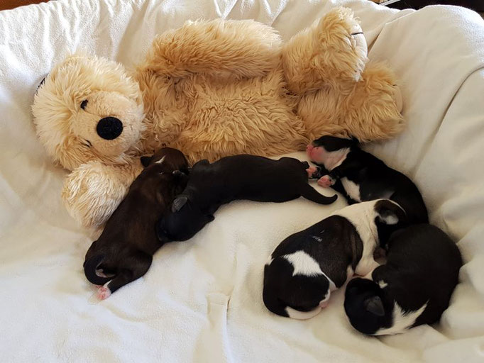 5. Lebenstag: ...während die Kinderlein den Bär als Ersatzmama haben!