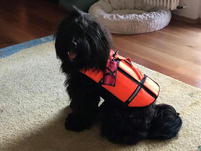 Pepper probiert die Schwimmweste an