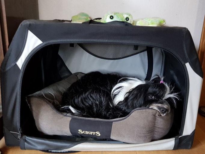 Geschützter Schlafplatz für Lisha