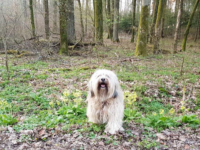 Fiona im Frühlingswald