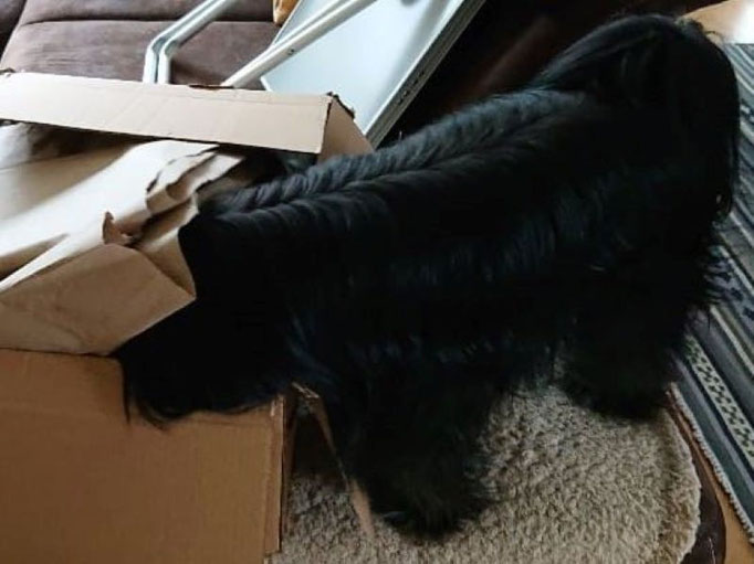 Sam - beim Karton auspacken