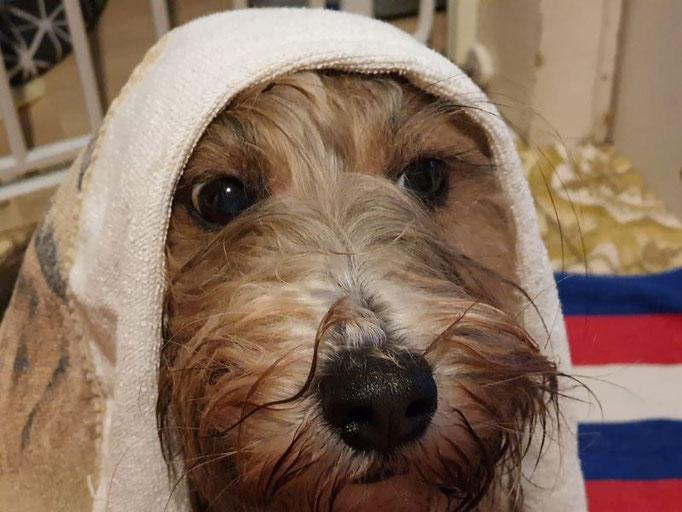 Regen - Regen - Regen - Milkas Beschwerde ist raus!!!