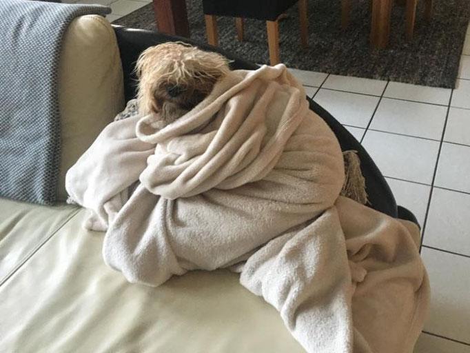Shani (1 J.) - das erinnert sehr an Mama Fiona, die muss auch warm eingewickelt werden nach dem Baden!