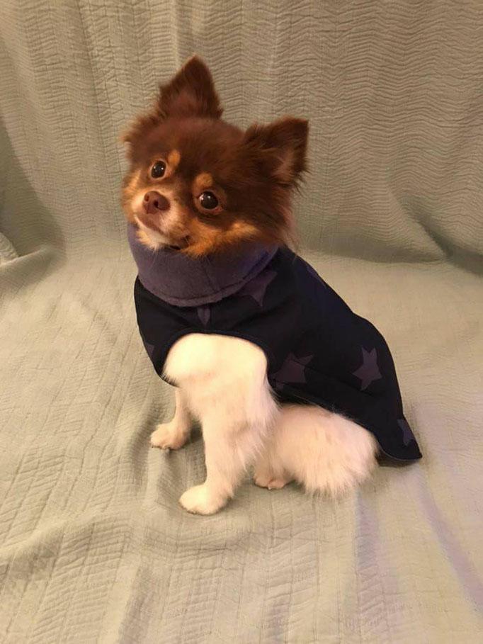 Softshell-Hundemantel, Hundemantel Maßanfertigung,  Hundemantel nach Maß