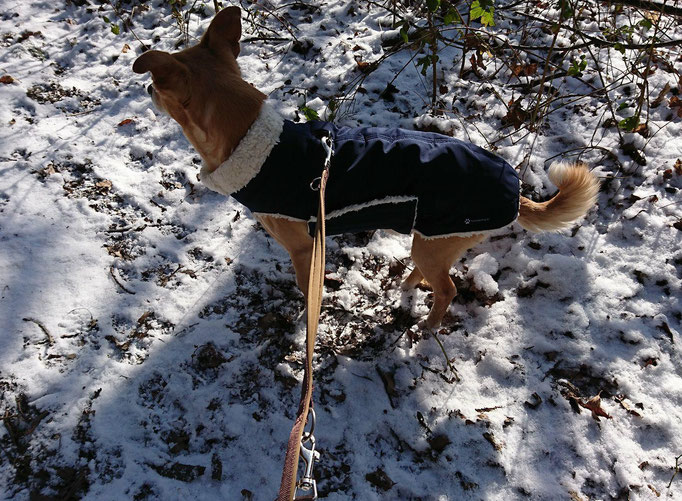 Hundemantel Maßanfertigung - Thermo-Hundemantel