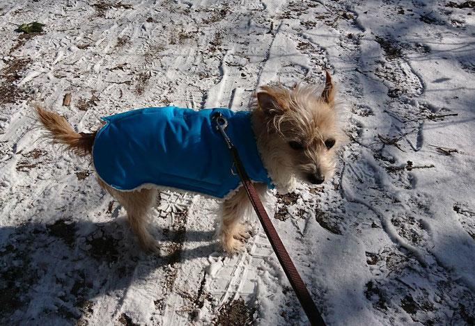 Hundemantel Maßanfertigung - Thermo-Hundemantel,  Hundemantel nach Maß
