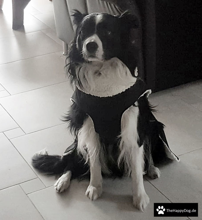 Thermo-Hundemantel, Wintermantel, Hundemantel Maßanfertigung