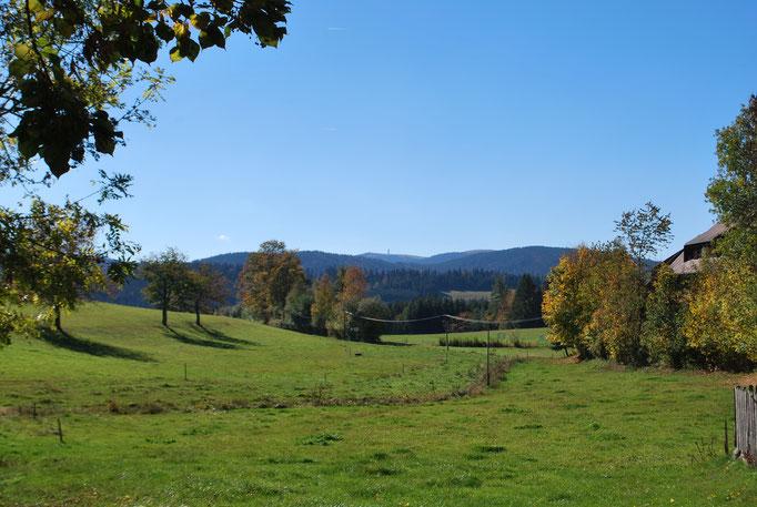 Blick im Sommer vom Jörgenhof auf den Feldberg