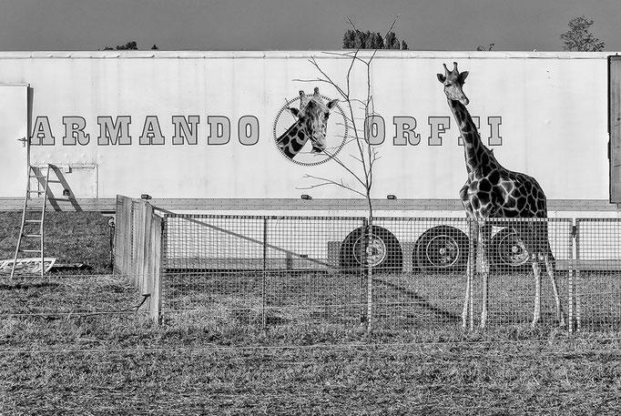 Gianni Maffi - Circo Armando Orfei, Vittuone (MI) - (2016)