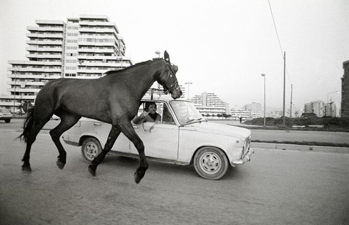 Francesco Cito - Cavallo al traino, Napoli 2007