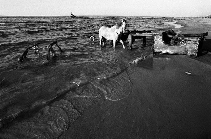 Francesco Cito - Il cavallo sulla spiaggia, Gaza (Palestina) 1993