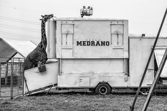 Gianni Maffi -  Circo Medrano 2, Assago (MI) - (2015)