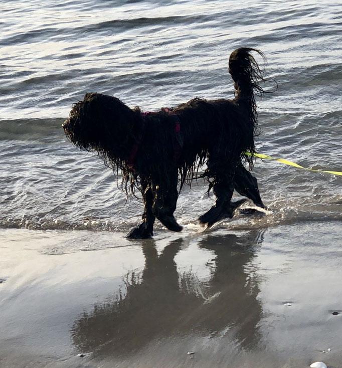 Camille...immer am Wasser zu finden...