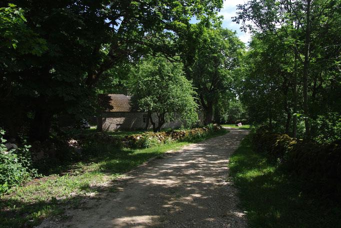 Un des chemins du village de Koguva