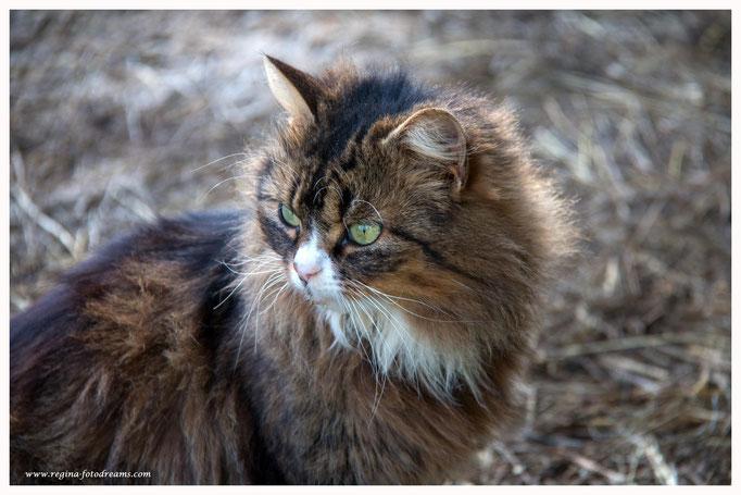 Katze (Art.-Nr. 9401)
