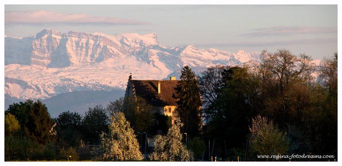 Schloss Greifensee mit Glarner Alpen im Hintergrund (7830)