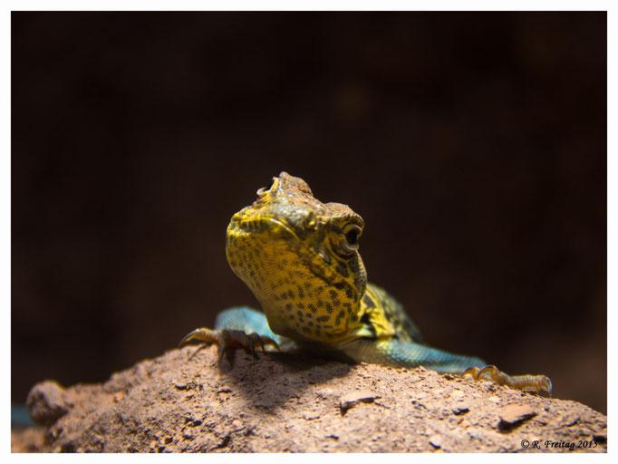 Gecko (2812)